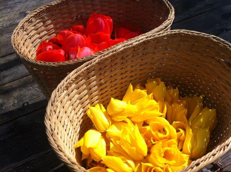 #Tulipani - #tulips http://fattoriadelleerbe.it/