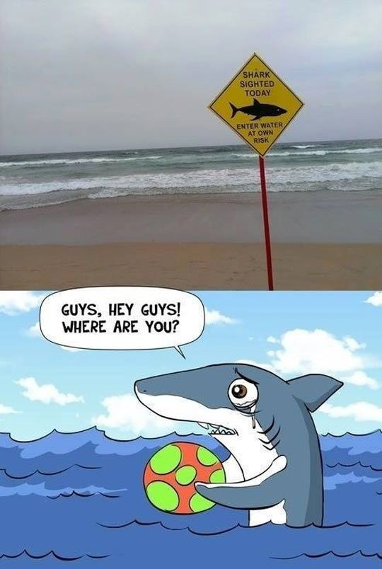 Poor shark...