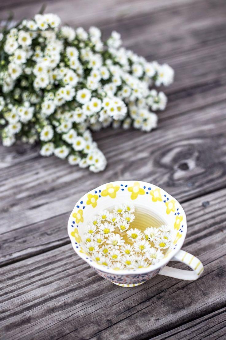 Gänseblümchen-Tee