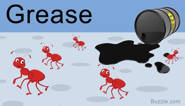 be0931f2db67b2ff2b76815c6d094bd5 - How To Get Rid Of Ants In Food Cupboard