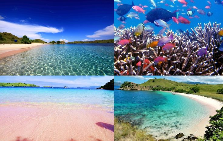 Pink Beach Flores Indonesia