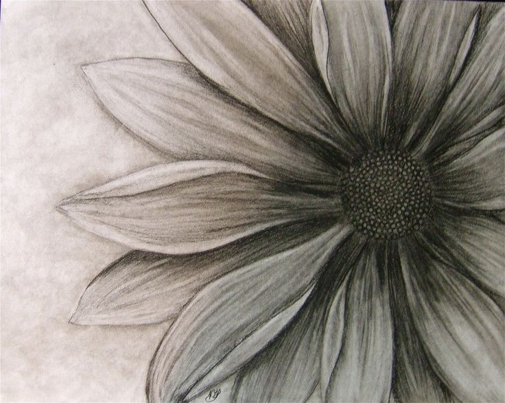 diasy tattoo black and grey black and white daisy shaded tattoo black and - Black And White Flowers