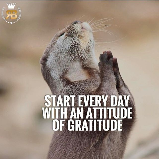 Start every day with an attitude of gratitude! TAG SOMEONE! #risebeyond