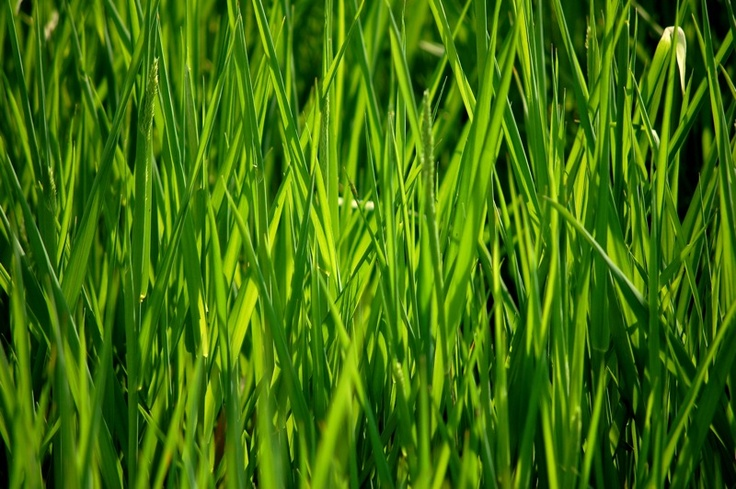 And the Green Grass Grows by Daniel Hopkins