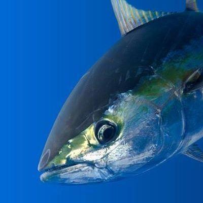 Can Fish See Fishing Line? Did you know fish eyesight improves with age. #camo #fishingline #fishingequipment #fishing www.xtremecharters.co.za