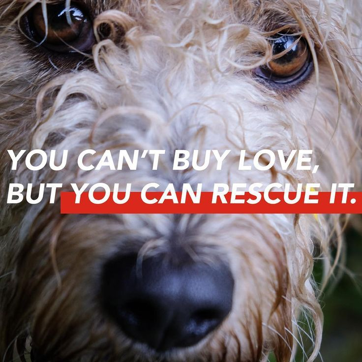 Priceless Therapy Dogs Dog Quotes Inspirational Dog Quotes Love
