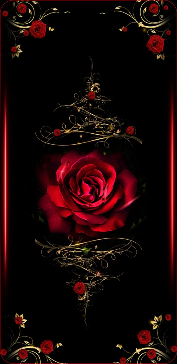 Black And Red Roses Red And Black Roses Wallpaper For