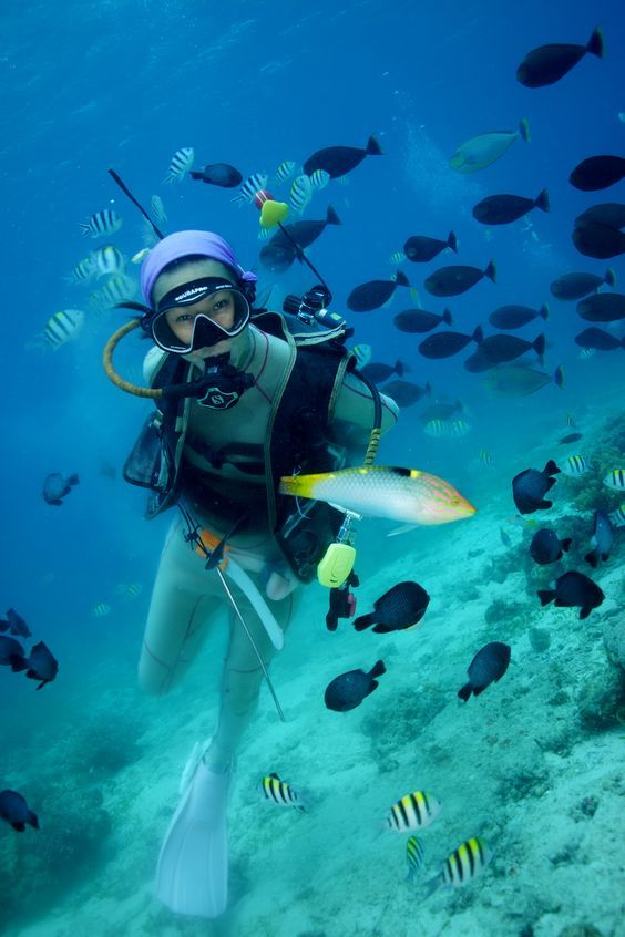 Best Diving Images On   Diving Snorkeling And