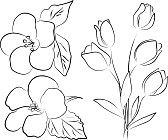 tekening bloem : twee hibiscus bloemen en tulp boeket - freehand