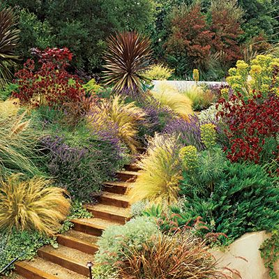 Color Inspiration! This photo has been a color inspiration for me designing low water use landscapes.
