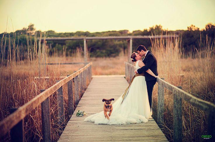Recordad, que en cada boda que hagamos a partir de ahora, un porcentaje del presupuesto (especificado en contrato) del reportaje fotográfico, será donado al refugio de animales que la pareja de novios elija. La única condicion, es casarte junto a tu mascota :) Compártelo si crees que ellos son parte de nuestra familia.