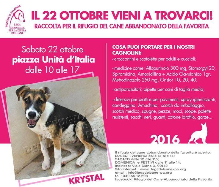 22/10 raccolta per gli ospiti del #RifugioLaFavorita della #LNDC #Palermo