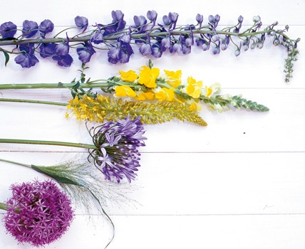 die besten 25 steppenkerze ideen auf pinterest lilie garten wei e zwiebeln und staudenbeet. Black Bedroom Furniture Sets. Home Design Ideas
