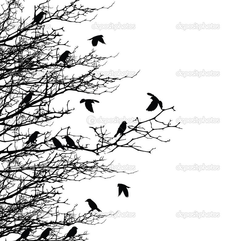 Tree silhouette with birds — Stock Vector © starlight789 ...