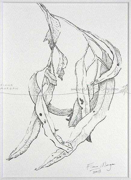 WhereFishSing.com Fiona Morgan, pen drawing 'Meditative Study' #WhereFishSing GUMLEAVES Matted Nature illustration ORIGINAL Botanical Drawing, Black & White, pen & ink, zen, mindfulness