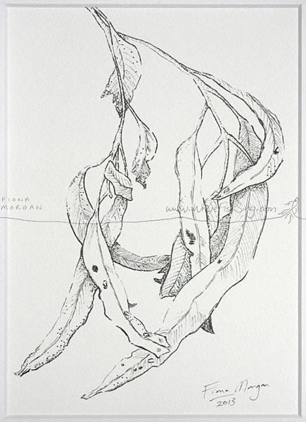 WhereFishSing.com Fiona Morgan, pen drawing 'Meditative Study' #WhereFishSing GUMLEAVES Matted Nature illustration ORIGINAL Botanical Drawing, Black & White, pen & ink, zen, mindfulness
