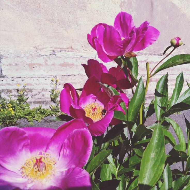 И цветы, и шмели, и трава, и колосья, И лазурь, и полуденный зной... Срок…