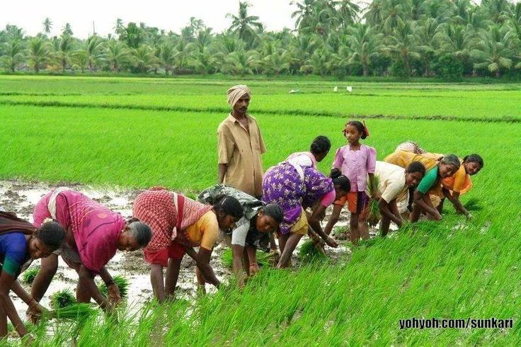 beautiful villages agriculture in india
