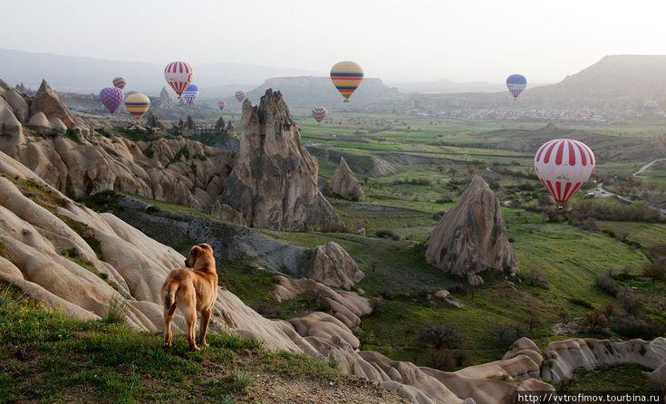 CappadociaFairies, Amazing Pictures, Cappadociaturkey, Cappadocia Turkey, Travel, Gorgeous Photographers, Incr Photography, Hot Air Balloons, Amazing Photos