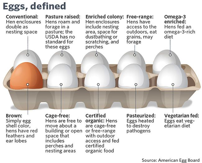 different types of eggs free range