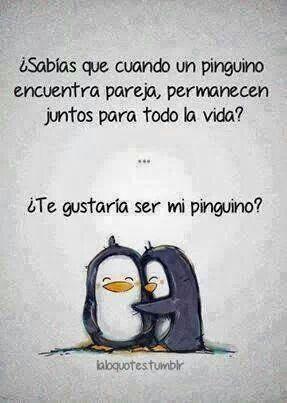 Yo quiero mi pinguino!!