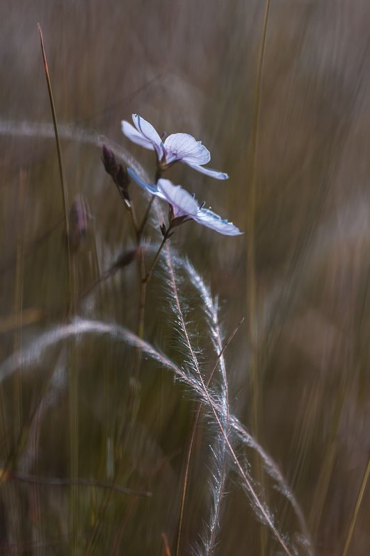 feather grasses with flowers