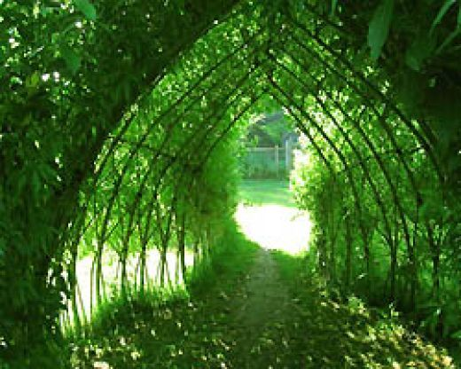 "How to build a ""living willow den"" and grow beans all over it."