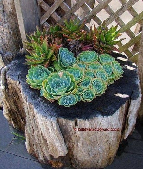 How to DIY Tree Stump Planter tutorial #diy, #gardening
