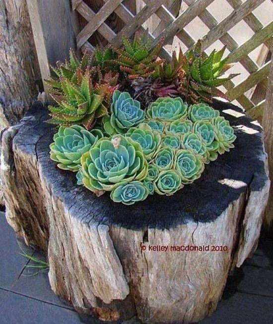 Succulent Stump Planter