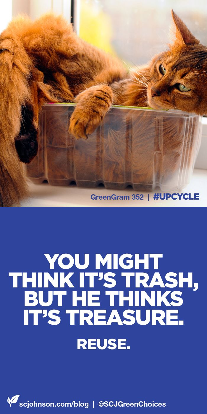 "Do you upcycle? There are so many great ways to turn ""trash"" into treasure. Hope you find some here on our board and share some of your own! Plus, click for tips from our blogger panel. #GreenGrams"