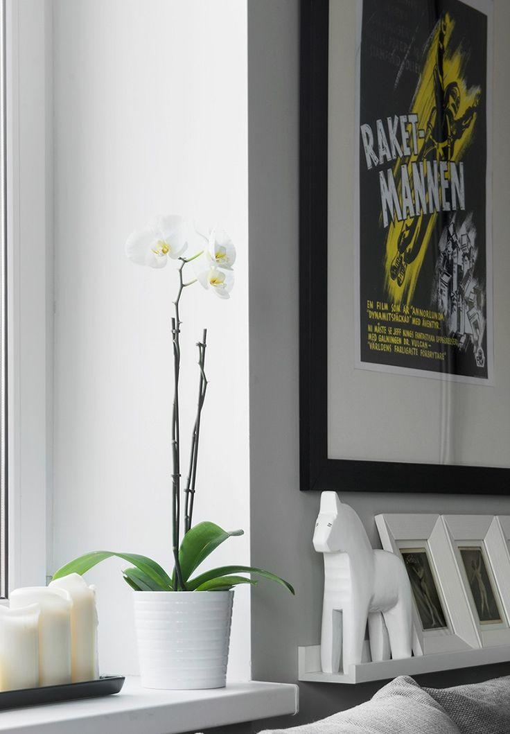 Bachelor Apartment Decorating Decoration Images Design Inspiration