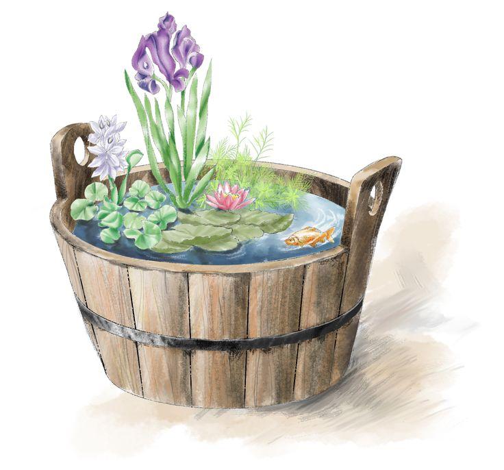 Oltre 25 fantastiche idee su piante acquatiche su pinterest for Laghetto tartarughe terrazzo