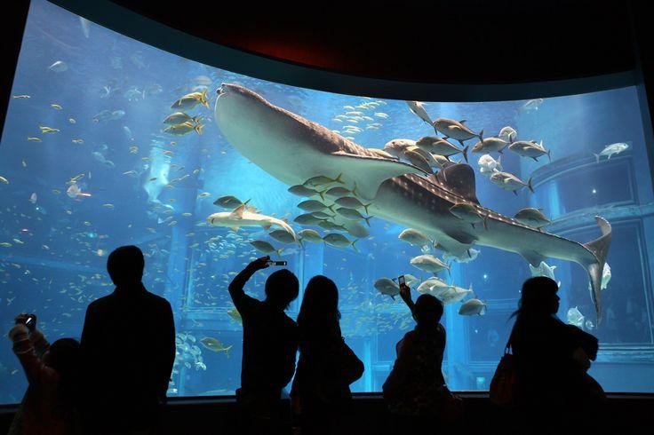 Kaiyukan Aquarium, Osaka  aquariums