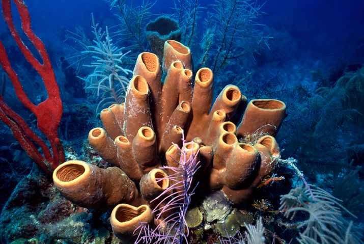 According to a new study, simple sea sponges were the first animal to appear on our planet about 640 million years ago, more than 100 million years before the Cambrian Explosion. The results sugges…