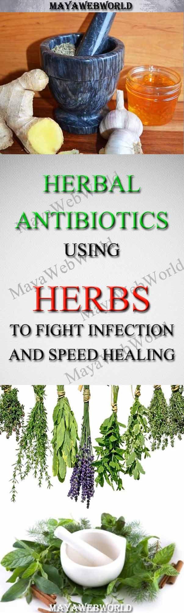 Herbal Antibiotics – Using Herbs to Fight Infection and Speed Healing – MayaWebWorld