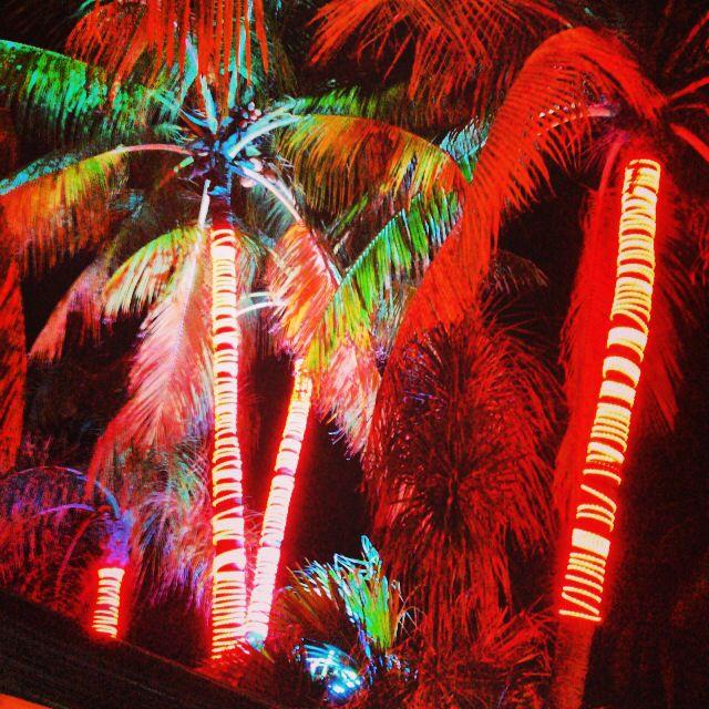 Miami beach  #SebastianWNA #WhatsNextMiami