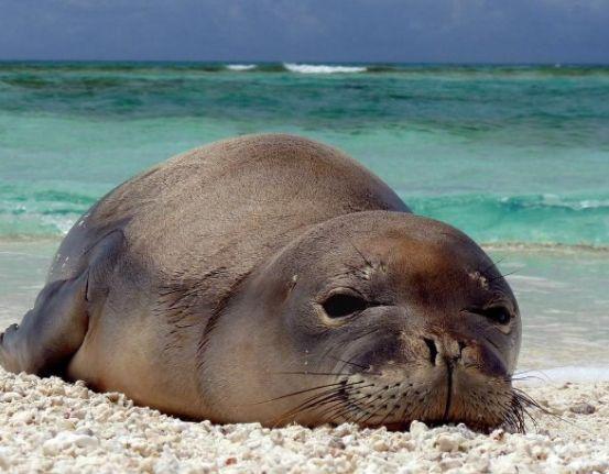 This Hawaiian monk seal shows how we all feel on #Saturday mornings. Photo: @Oceana