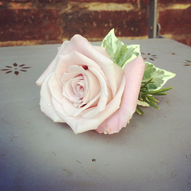 Beautiful Faith rose by www.wildorchidweddingflowers.co.uk