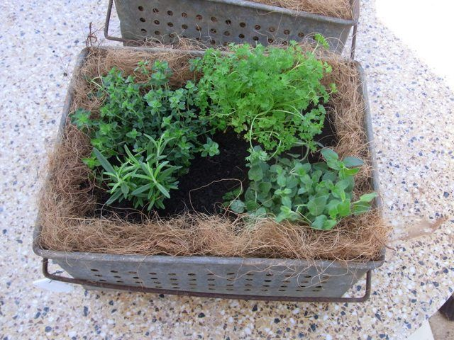 Try adding some herbs, they make a great mini herb garden.