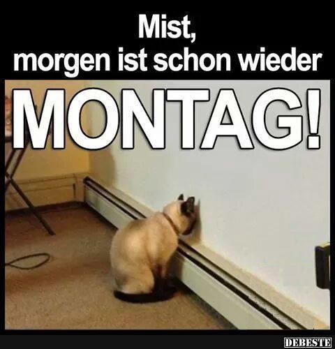 Mist, morgen ist schon wieder Montag! | DEBESTE.de, Lustige Bilder ...