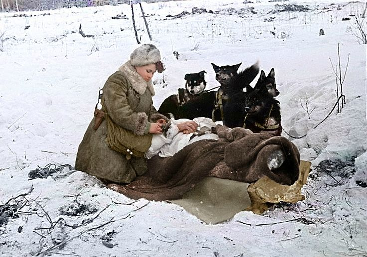 Медсестра Колесникова эвакуирует раненого солдата на собачьих упряжках. 1943 год