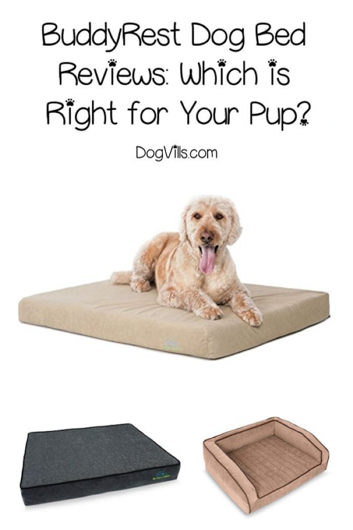 Buddyrest Dog Bed Reviews Which One Is Right For Your Dog Dog Bed Cute Dog Collars Dogs