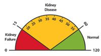 A normal eGFR is 60 or more. A low eGFR number may suggest kidney disease. Use this scale to see what your eGFR may mean.