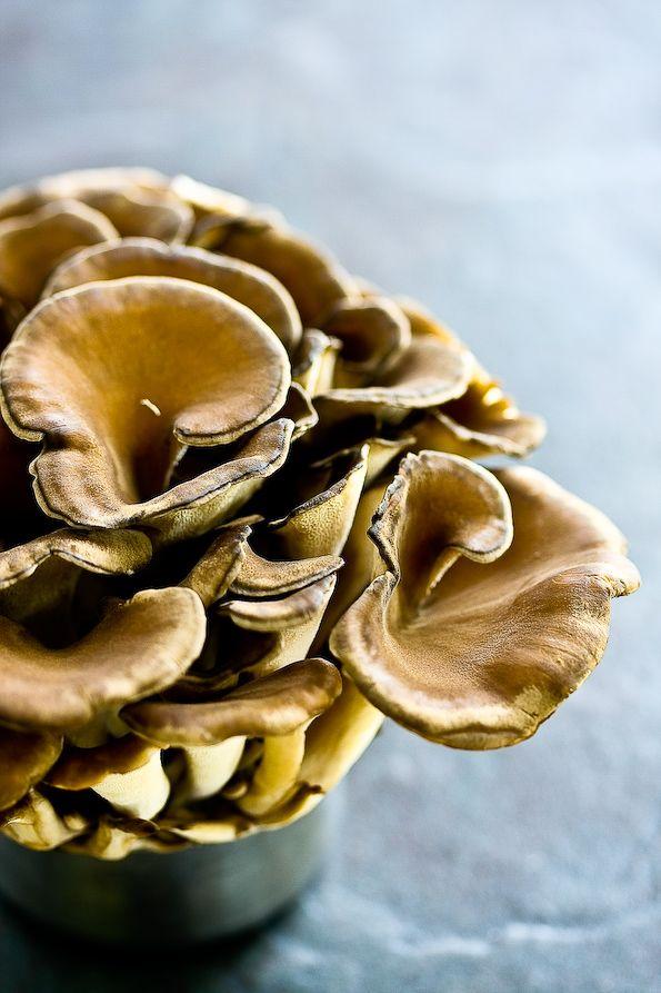Japanese Maitake Mushroom