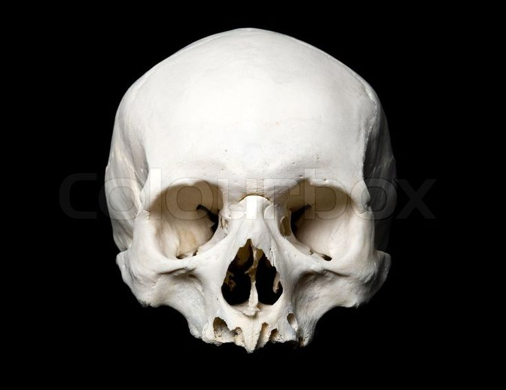 real human skull front view black and white - Google ...