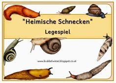 krabbelwiese: Schnecken