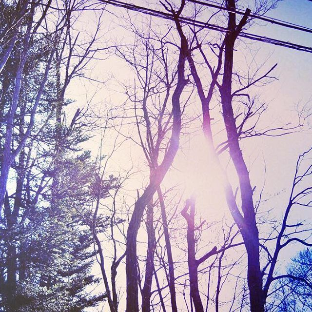 【_kaory17】さんのInstagramをピンしています。 《_ _ ここ数ヶ月間朝が苦手です。 寒さのせいでしょうか。 起きればあの清々しさが味わえるというのに、布団から出たくないからやっぱり寒さのせいだな。 _ _ _ #tree #forest #sky #木 #森 #雑木林 #カメラ女子 #Nikon #ニコン #nikon_photography_ #nikon倶楽部 #ニコン倶楽部 #d5500 #nikond5500 #nikond5500photography #一眼レフ#filmcamera #単焦点レンズ #写真好きな人と繋がりたい #ファインダー越しの私の世界 #デジタルでフィルムを再現したい #ig_japan #ig_japanese #team_jp_東 #as_archive》