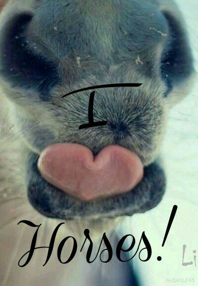 Created by Lauren Denard. horse nose and tongue shaped like heart. Love the fuzzy… - https://www.soumo.eu/created-by-lauren-denard-horse-nose-and-tongue-shaped-like-heart-love-the-fuzzy/
