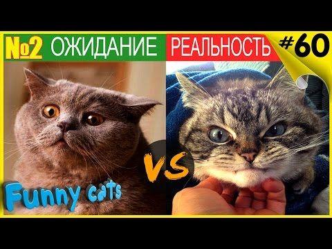 Приколы с котами Ожидание Реальность 2 Cats Expectation Reality