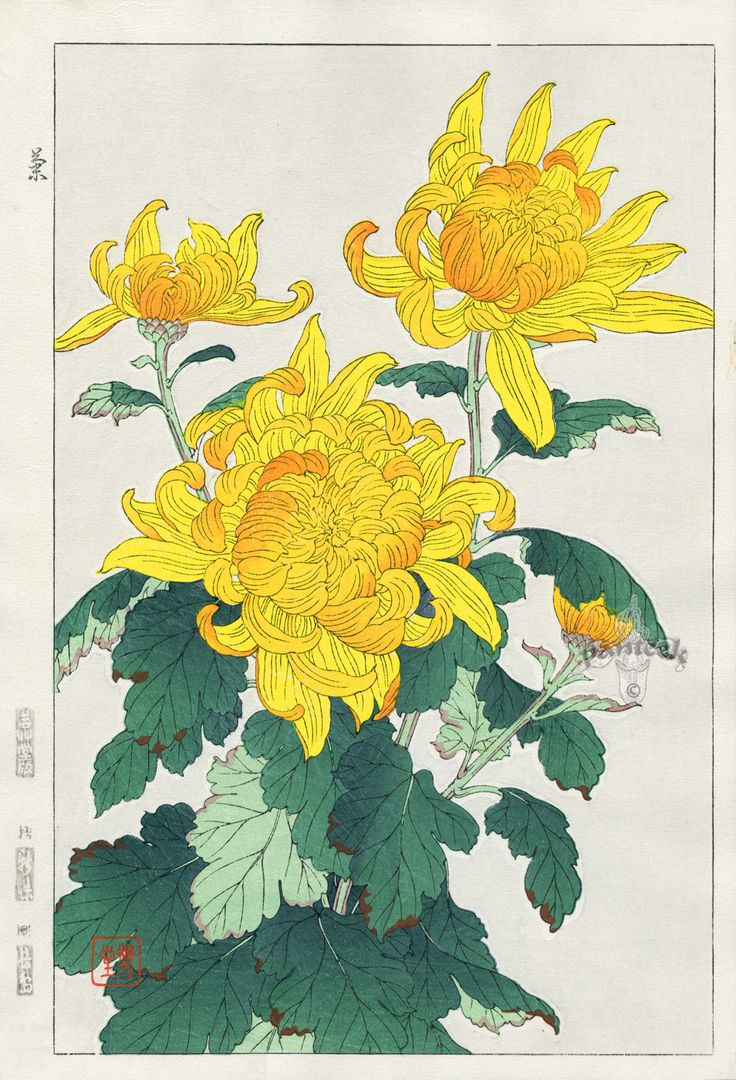 Yellow Chrysanthemum | Kawarazaki Japanese Art | #Japanese #Art #Flowers #Chrysanthemum